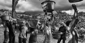 sélecteurs-café-costa-rica-2013